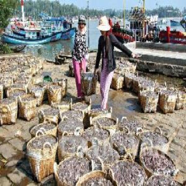 Thu nhập cao từ nuôi cá chạch sụn
