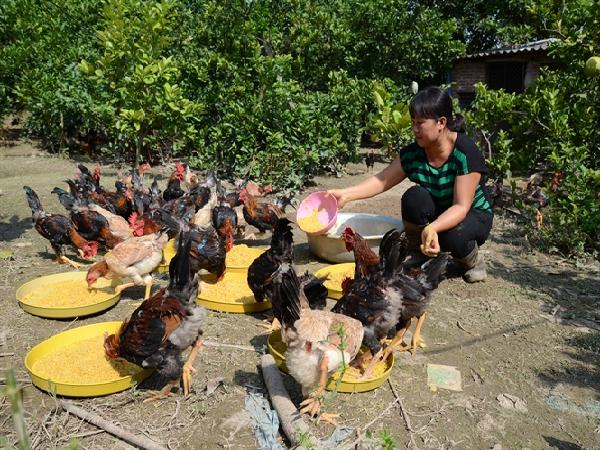 Nuôi động vật bản địa bằng thức ăn tự nhiên, doanh thu hơn 1 tỷ đồng/năm