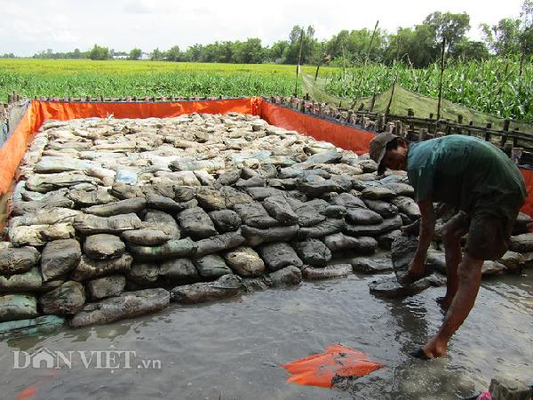 LẠ MÀ HAY: Xếp hàng trăm bao đất trong bồn chỉ để...nuôi con trơn