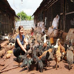 Đắk Lắk: 8X làm giàu bằng mô hình chăn nuôi đa con