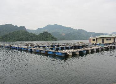 Điện Biên: Nuôi thuỷ sản theo hướng bền vững