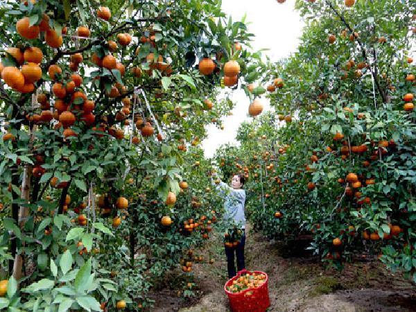 CS-Bón phân đúng cách, cây trồng không mất lực trong kỳ nghỉ đông