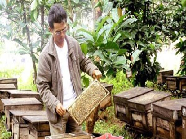 Giá mật ong Việt Nam giảm mạnh