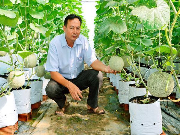 Ứng dụng công nghệ Israel trong trồng dưa lưới