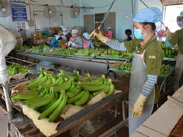 Nông sản Việt 'hái' tiền đô nhờ công nghệ Nhật như thế nào?