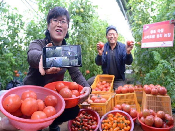 """Hàn Quốc bước vào thời đại """"nông trại thông minh"""""""