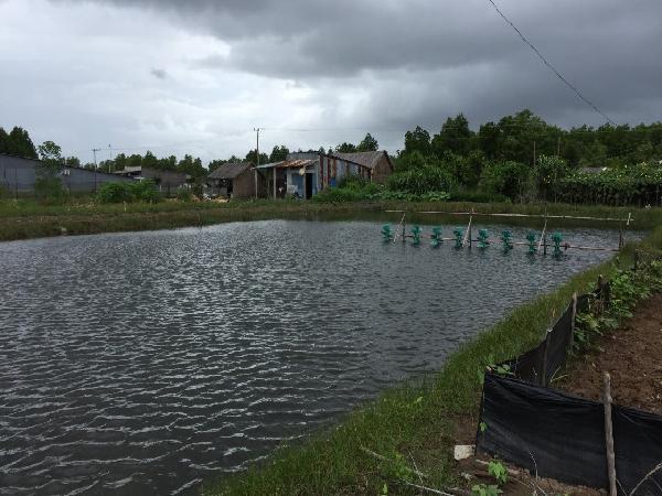 NT-Phòng trị bệnh cho cá trong mùa mưa lũ