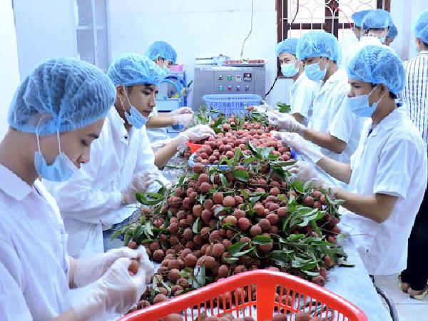 Nông nghiệp Việt Nam trỗi dậy ngạc nhiên sau thiên tai liên tiếp