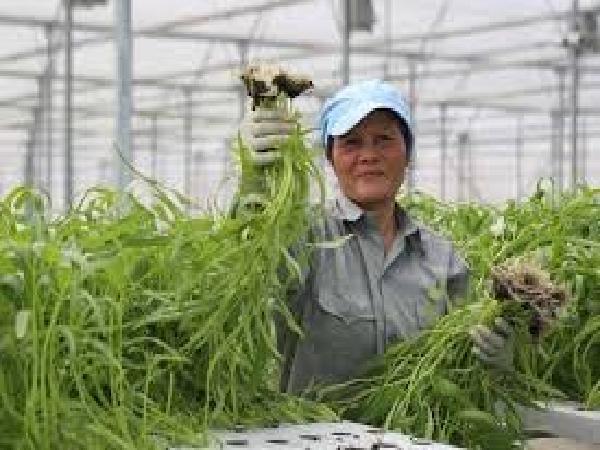 Chính sách hỗ trợ đầu tư phát triển nông nghiệp sạch 2017