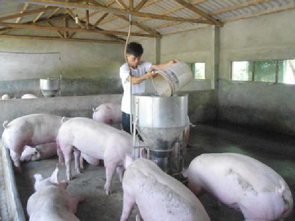 N-Quy trình thực hành chăn nuôi tốt cho chăn nuôi lợn an toàn trong nông hộ (VietGAHP nông hộ)