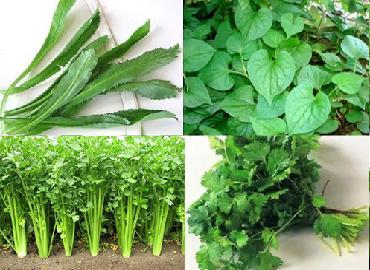 Đầu tư nhỏ, hiệu quả lớn nhờ trồng rau gia vị