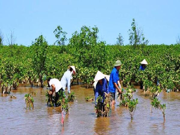 Nuôi tôm - sò dưới tán rừng ngập mặn, thêm thu nhập, lại bảo vệ rừng