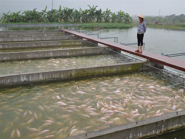 Nể phục chàng boxing chế ra sông nhân tạo nuôi cá số 1 Việt Nam
