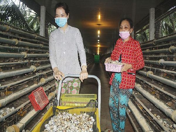 Chăn nuôi công nghệ cao ở Tiền Giang