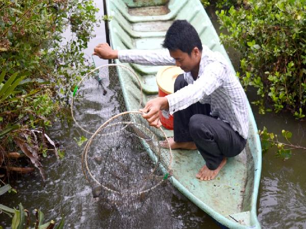 Cà Mau: Trình diễn kỹ thuật chế biến tôm sinh thái xuất khẩu