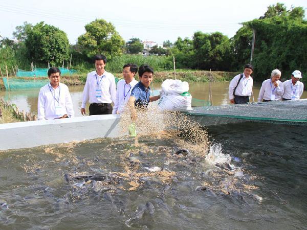 NT-Cách ương cá tra bột nhân tạo