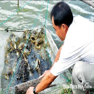 Thừa Thiên Huế: Triển vọng từ mô hình thủy sản mới