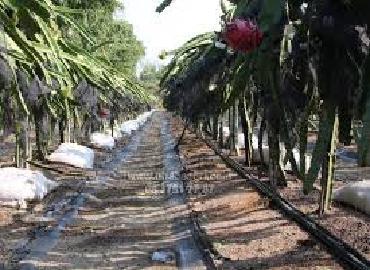 Nông dân tự thiết kế hệ thống tưới tiết kiệm cho cây thanh long