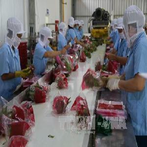 Mở rộng thị trường rau quả tươi của Việt Nam xuất khẩu vào EU